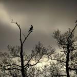 Oiseaux contre-jour, Thoiry (2009)