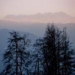 Arbres sur fond de ciel rose, Mercury