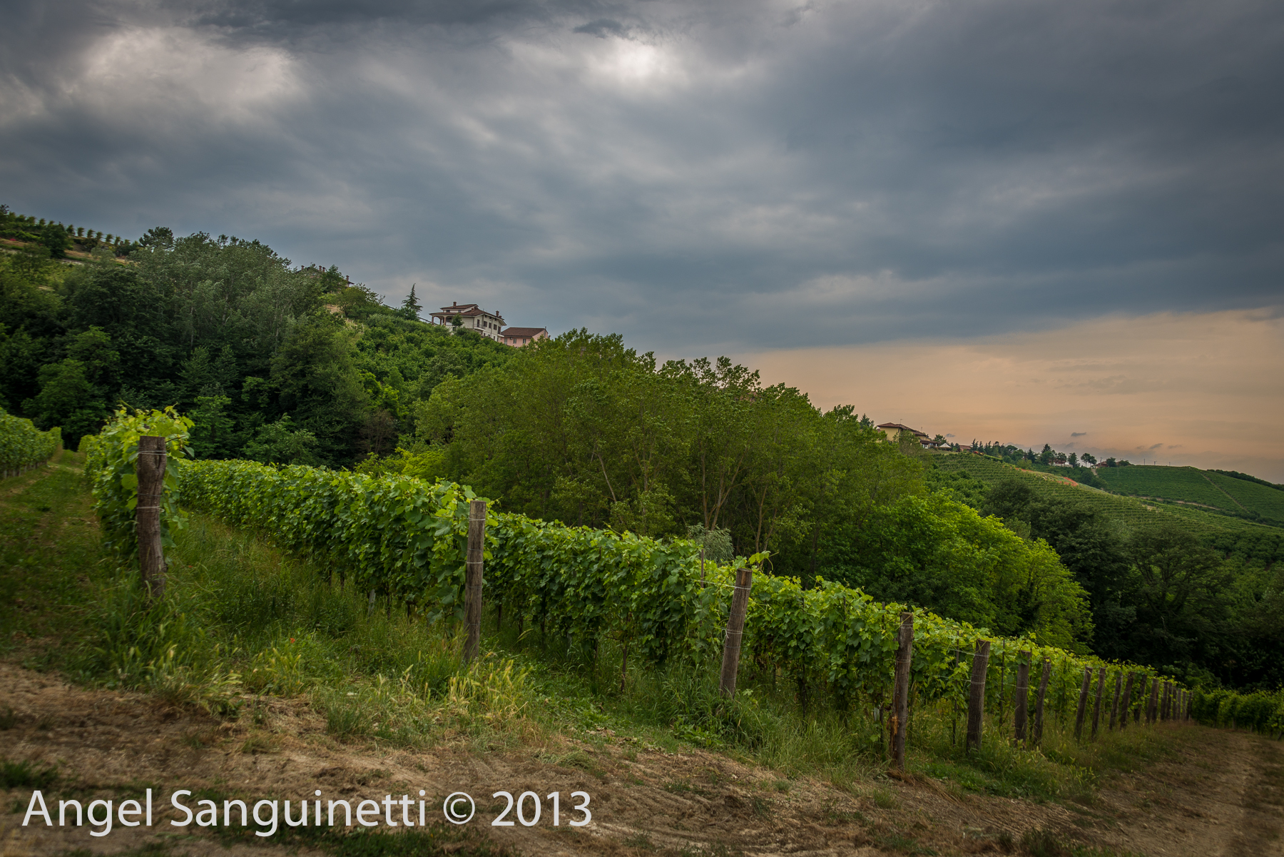 barbaresco, vignes, piémont, italie, Albe