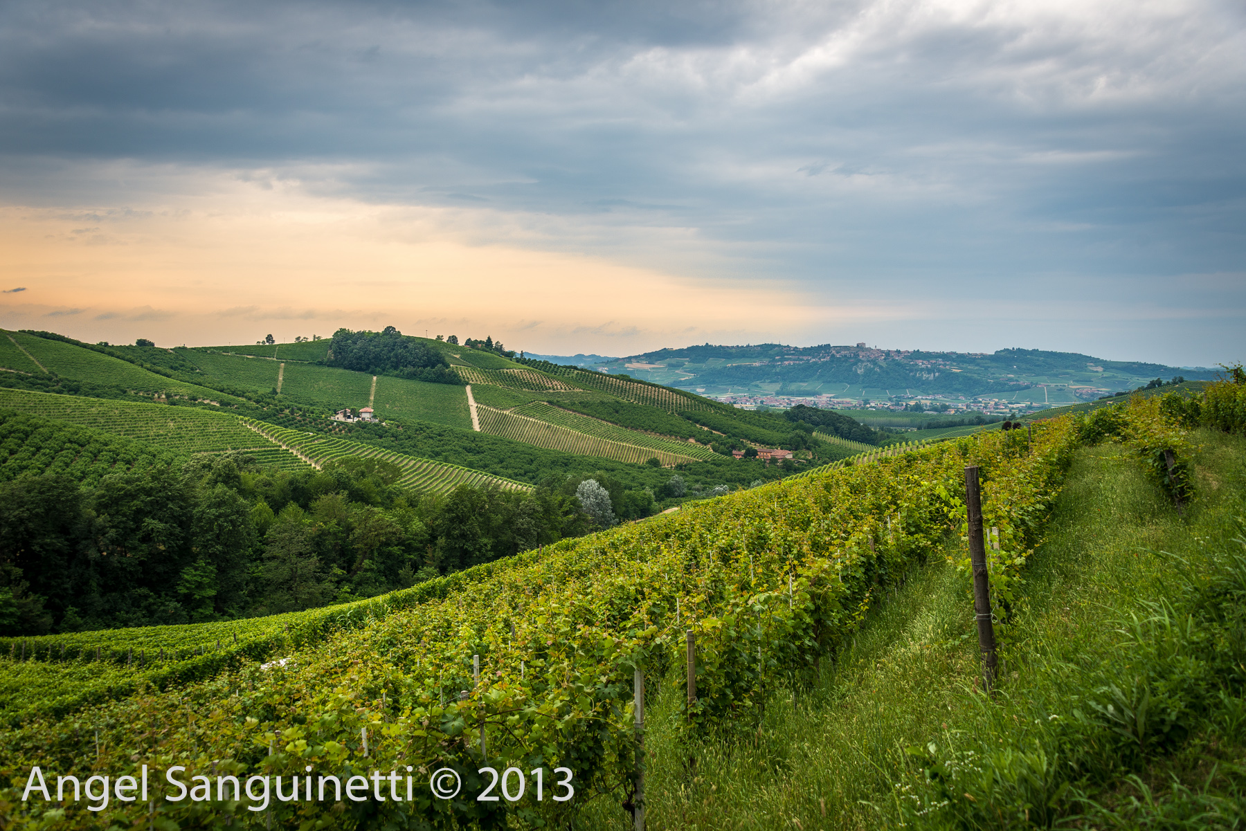 barbaresco vignes-5