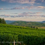 Vignobles, Grinzane Cavour, Italie